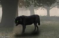 ChÓ Tinh ! Con chó cái nhà phú ông đi hoang một thời gian bỗng quay về. Ông mừng rỡ, lại càng mừng hơn, khi thấy cái bụng nó có chửa. Ít lâu sau, con chó cái đẻ được năm con chó con, trong đó có một con chó đực toàn thân đen như mực, […]