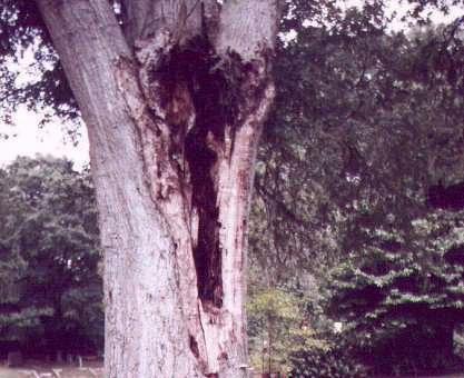 Cây Xoài Ma – Truyện Ma Audio Rùng Rợn Nhất Tôi nghe rõ một tiếng đàn bà gào lên đau đớn đúng lúc một cơn gió mạnh nổi lên khiến cả cây xoài rung động mạnh giữa lúc những giọt nhựa màu trắng đục ứa ra từ vết đâm nhiểu xuống thân cây. Đột nhiên […]